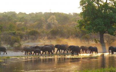 Trip Report – Caprivi Strip, Namibia Self Drive