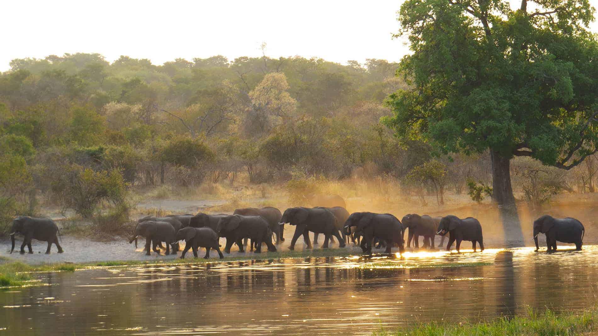 Trip Report - Caprivi Strip, Namibia Self Drive - Bushlore