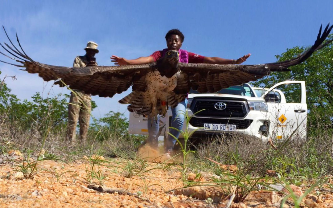 Bushlore Africa gives Martial Eagle Conservation new 4×4 wheels